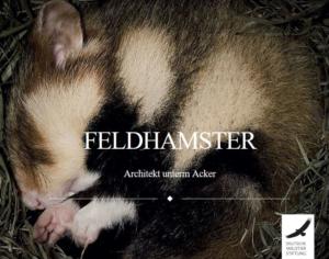 Feldhamster Blog