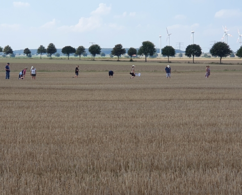 In einer Reihe gehen die Feldhamster-Bau-Sucher ein Feldstück ab.