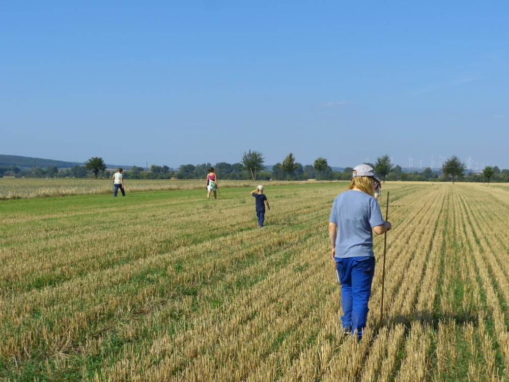 gemeinsame Suche nach Feldhamsterbauen auf dem Acker
