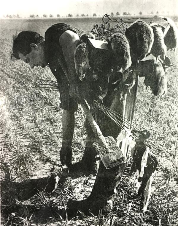 Feldhamsterfänger bei der Jagd