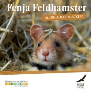 Fenja Feldhamster - Allein auf dem Acker?