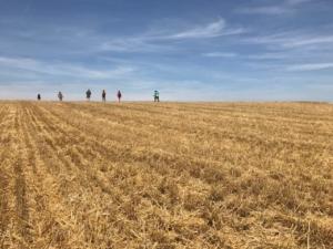 Sommerkartierung - Nach der Ernte geht es über den Stoppelacker