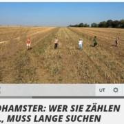 Feldhamsterland im Fernsehen auf MDR