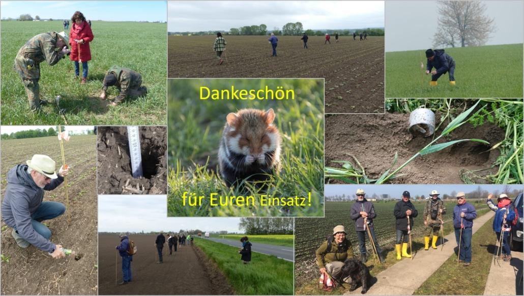 Feldhamster Frühjahrskartierung in 2021Feldhamster Frühjahgrskartierung in 2021